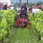 Passage de rouleau et de brosses pour le couchage de l'herbe. Démonstration dans une parcelle de vigne bio en enherbement total (trèfles).
