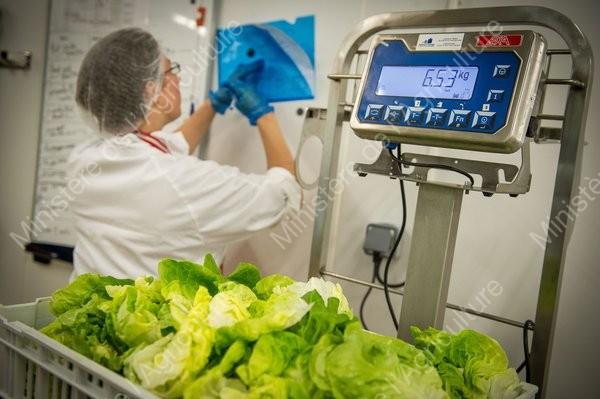 Atelier agro-alimentaire bio de l'association pour la réadaptation et l'intégration par l'accompagnement (ARIA 85). Préparation de salade pour les collectivités.